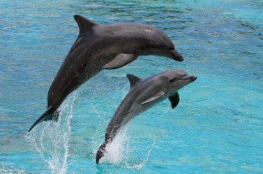 A pair of dolphins.