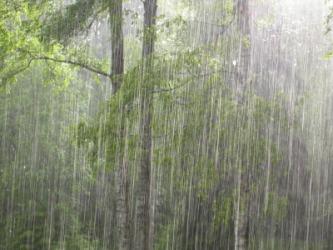 A summer downpour.