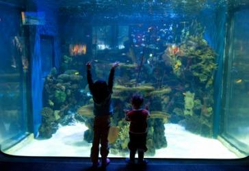 Children visiting an aquarium.