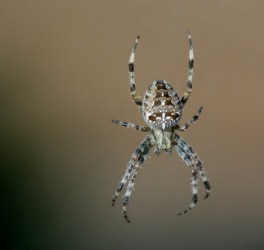 The spider is an example of an arachnid.