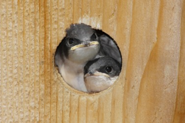 A birdhouse in which two little birds dwell.