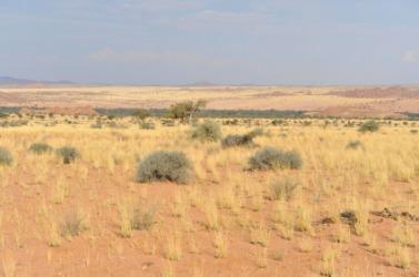An arid landscape.