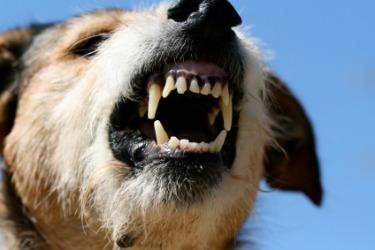 A ferocious dog.