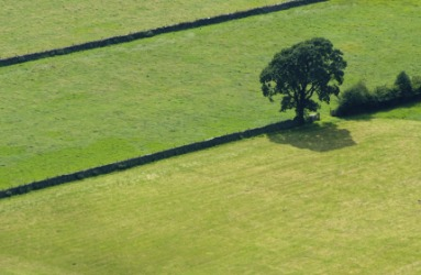 A single tree in a fertile field.