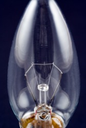 Filaments in a lightbulb.
