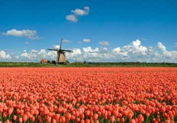 A floriferous field.