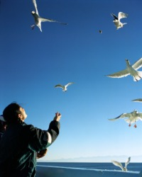 A person feeds seagulls as they fly.