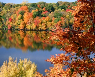 Fall foliage beside a lake.