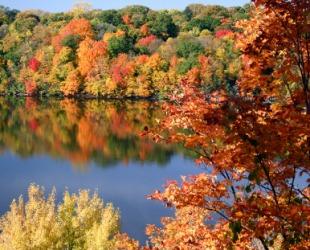 Fall foliage beside a lake.