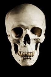The image of a skull will frighten some people.