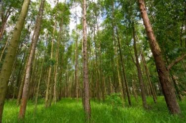 A small grove.
