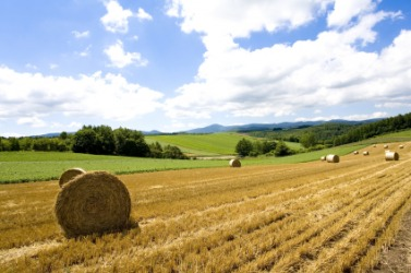 A field of hay.