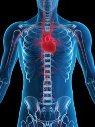 The human heart.