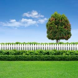 Hedge Dictionary Definition Hedge Defined