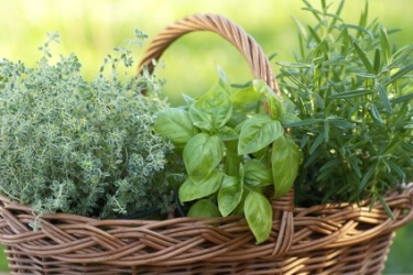 A basket of fresh herbs.