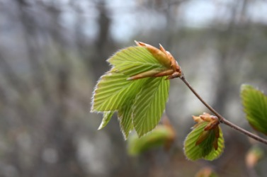 Leaves against a blurred background.