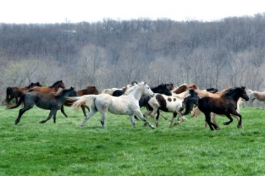 A herd of horses.