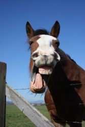 A hilarious horse.