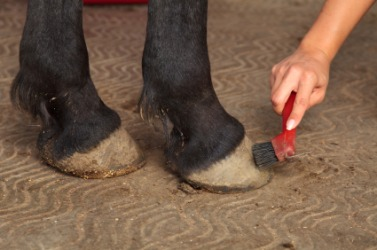 A woman cleaning the hoof of her horse.