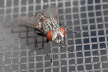 A house fly on a screen.