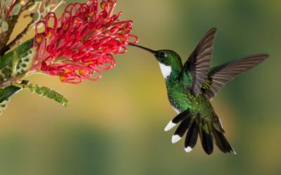 A hummingbird hovers near a flower.