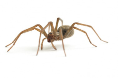 A spider is an example of an invertebrate.