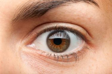 Close up of a brown iris.