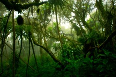 A dense tropical jungle.