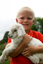 Two kids - one human, one goat.