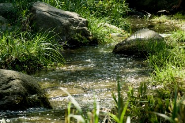 A stream flows through the forest.
