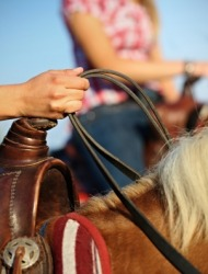 Hands holding the reins of a horse.