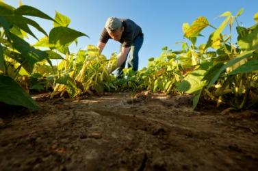 A farmer toils in his field.