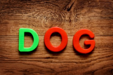 Plastic letters spell the word dog.