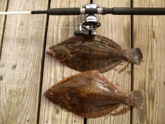 A pair of fresh caught flounder.