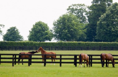Horses grazing in the paddock.
