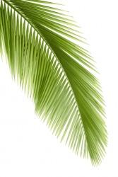 A single palm leaf.