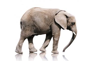 An elephant is heavy.