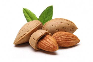 Nut dictionary definition | nut defined