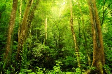 A lush rainforest.
