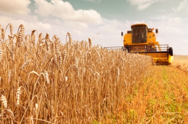 A farmer uses a harvester to reap the wheat.