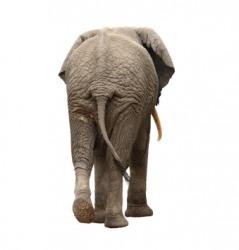 The rear end of an elephant.