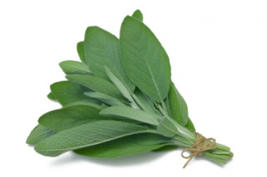 Leaves of the sage plant.