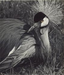 A very beaky bird.