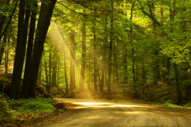 Beam of light shining through the trees.