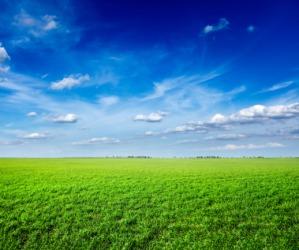 A verdant field.
