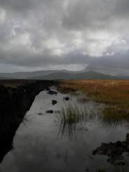 A bog under a stormy sky.