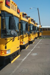 A row of school busses.