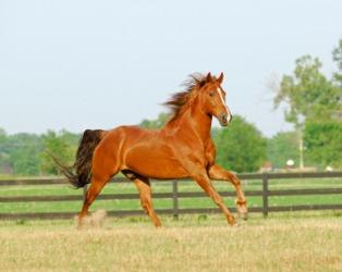 A cantering horse.