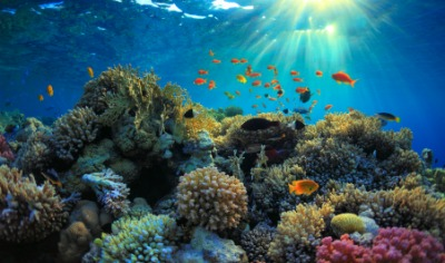 This coral reef is an example of an ecosystem.