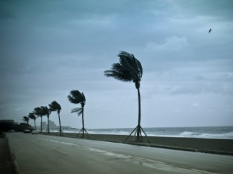 Palm trees in a gale.
